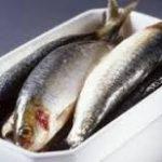 ماهی قزل آلا تازه