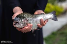 ماهی قزل آلا ایرانی
