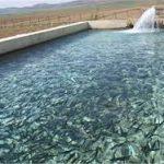 بزرگترین بازار فروش ماهی قزل آلا
