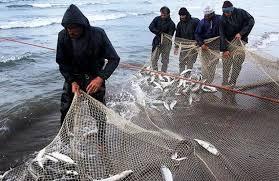 ماهی قزل آلا دریایی