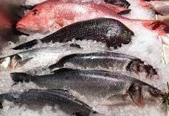 فروش انواع ماهی قزل آلا منجمد