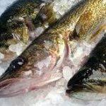قیمت ماهی قزل آلا منجمد