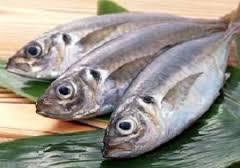 ماهی قزل آلا تهران