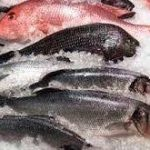 ماهی قزل آلا منجمد