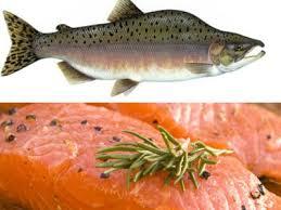 ماهی سالمون قزل
