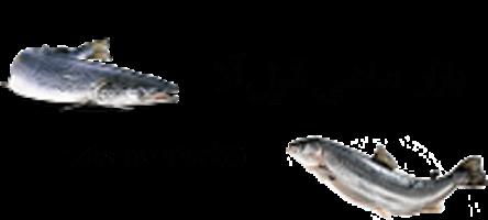 بازار خرید و فروش ماهیان سردابی و گرمابی