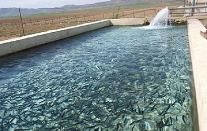 مرکز فروش بچه ماهی قزل آلا