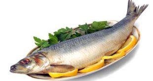 انواع ماهی قزل آلا در ایران